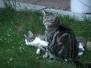 Andere Katzen